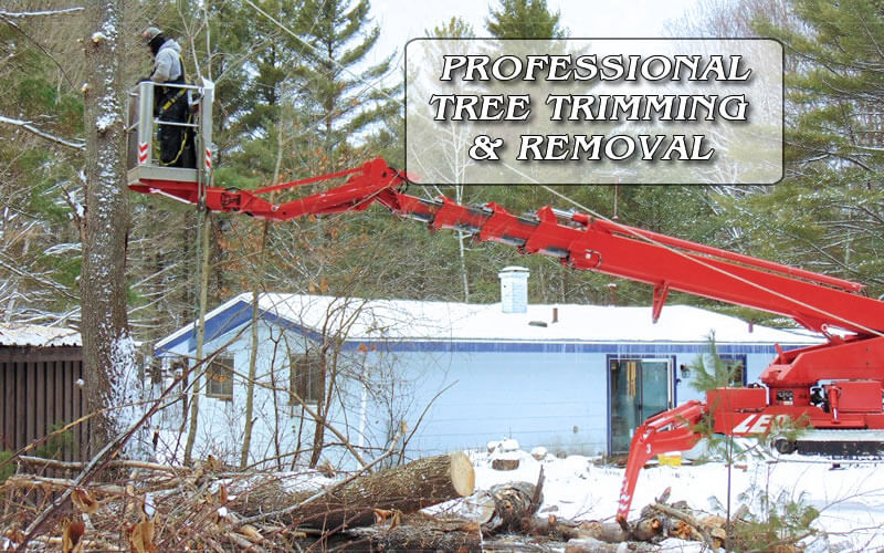 Professional Tree Trimming & Removal
